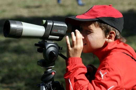 Akár kertje madarainak számbavételével is csatlakozhat az Európai Madárfigyelő Napokhoz