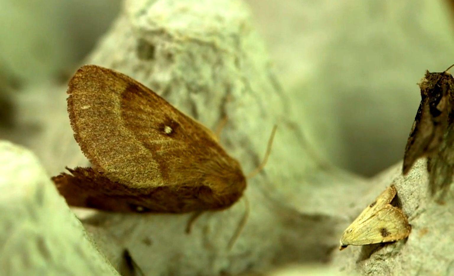 Éjszakai pillangók után kutatott a híradó a Kiskunságban