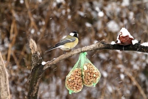 Indul a madáretetési szezon