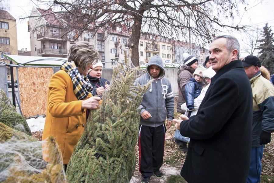 Több száz fenyőfát osztottak szét a bajai nagycsaládosok között