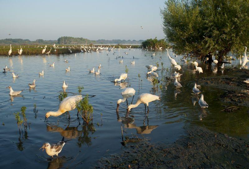 Igazi madárparadicsommá alakulhat a tiszaalpári Nagy-tó