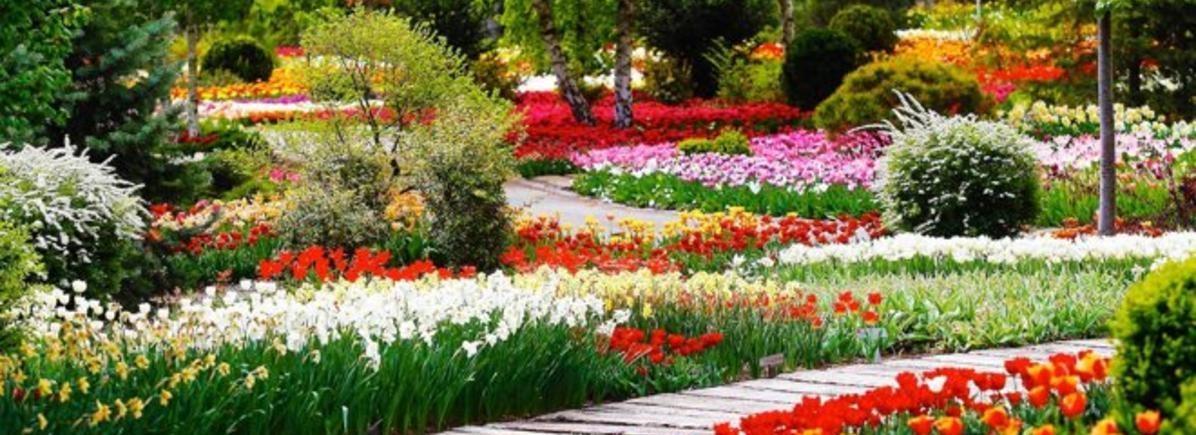 Kecskeméten van hazánk legnagyobb tavaszi kertje