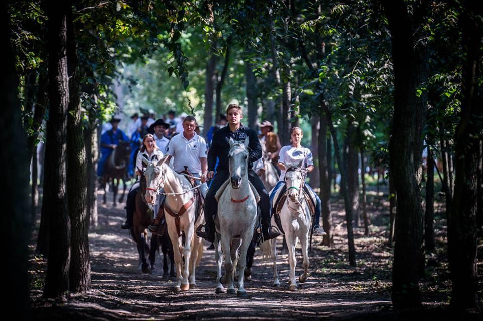 Újra átélhetjük a lovas lét örömét a félegyházi Parkerdőben