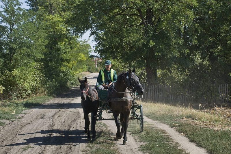 Akár hungarikum is lehetne a gátéri lovas postás