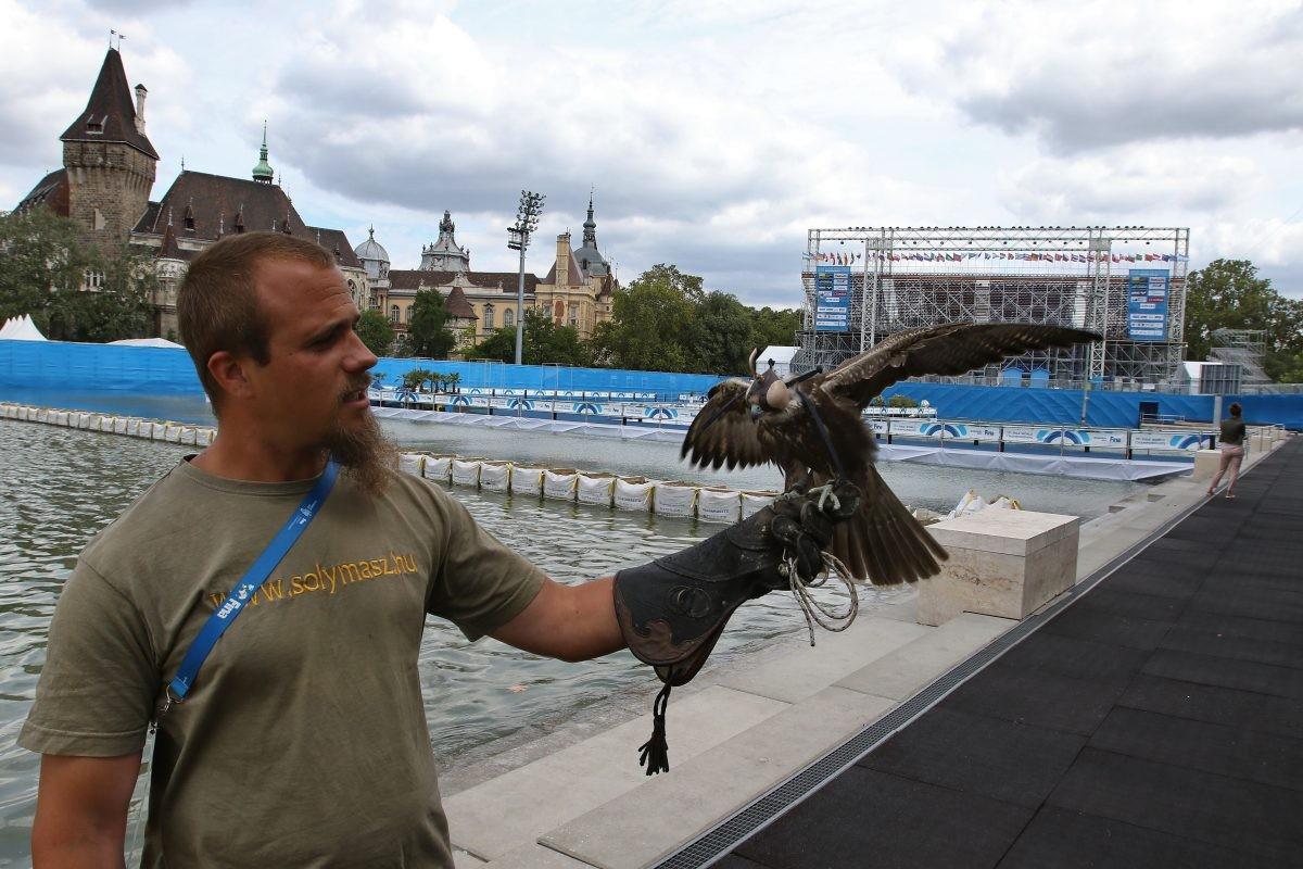 Kiskunfélegyházi solymász vigyázott a vizes vb madaraira