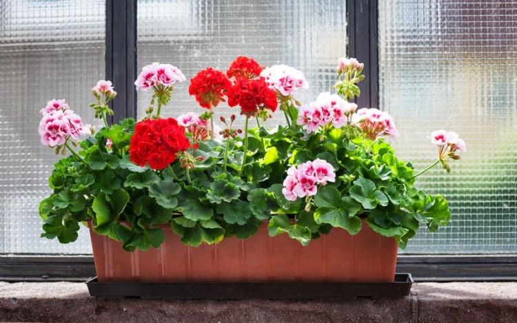 Virágaink téli álma