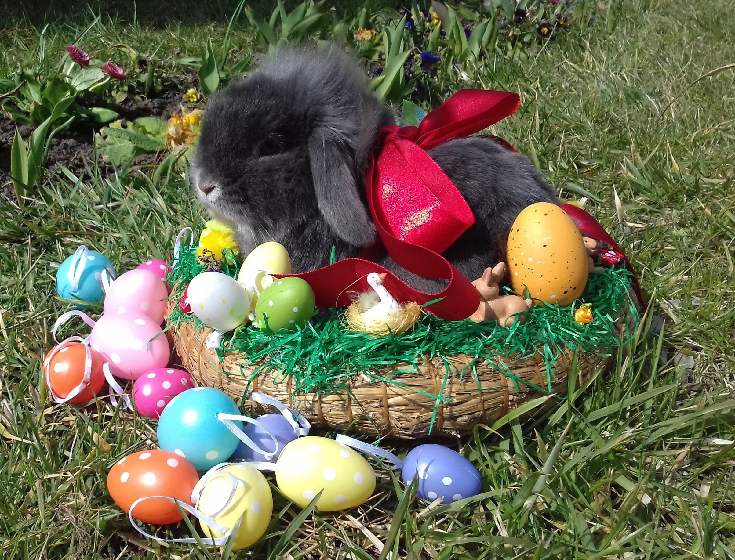 Izgalmas programokkal vár Húsvétkor a Kecskeméti Vadaskert!