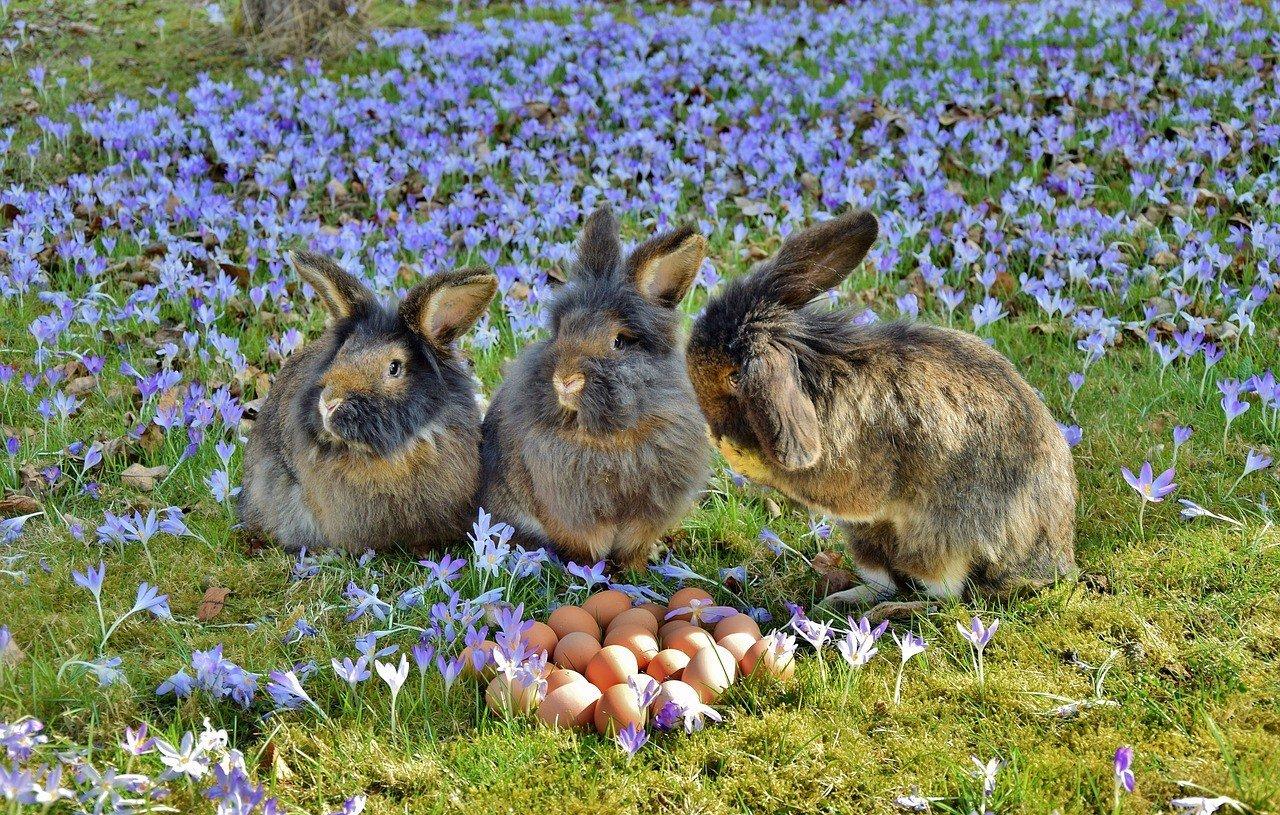 Legjobb Húsvéti családi programok Kecskeméten és környékén