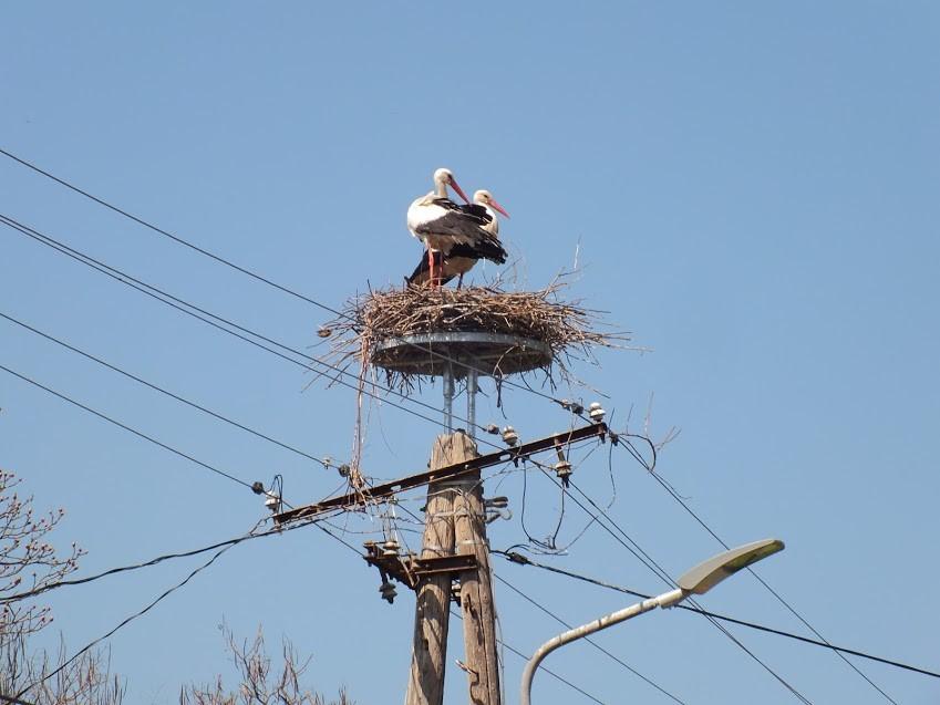 Biztonságos fészkek várták a hazatérő gólyákat