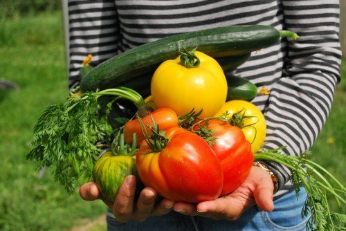 Már áprilistól elérhetőek a hajtatott magyar zöldségek