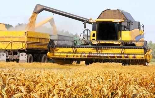 Közepes termés, de jó árak az aratáskezdeten