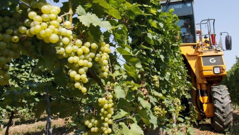 Csökken a hazai borászati cégek száma, de az árbevételt sikerült növelni