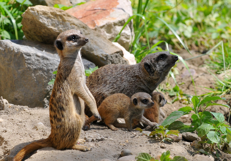 Nem sokára jön az Állatok Világnapja a Kecskeméti Vadaskertbe