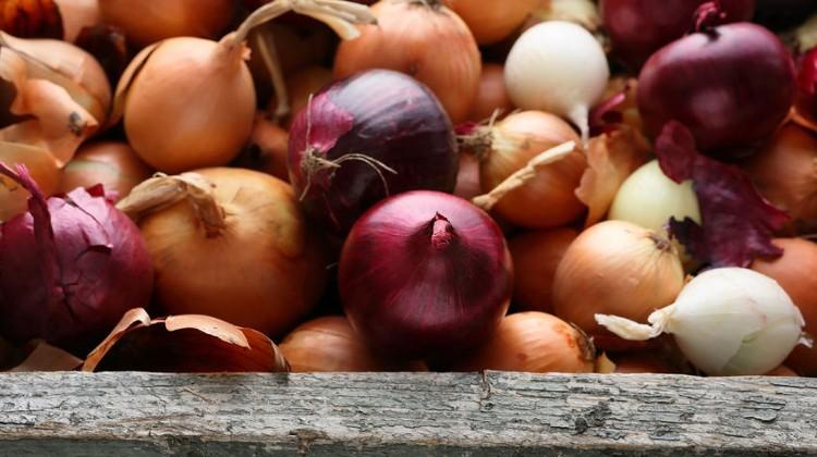 Összefogással stabilabbá válhat a magyar hagymaágazat
