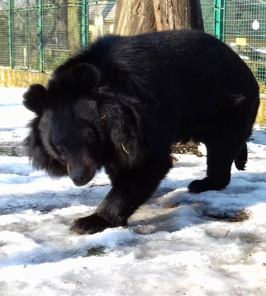 Medve les a Kecskeméti Vadaskertben