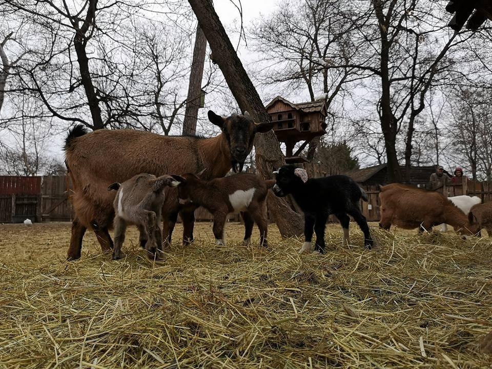 Egészséges kicsinyek születtek a Kecskeméti Vadaskertben