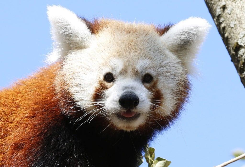 Újabb ritkasággal bővült a Pécsi Állatkert