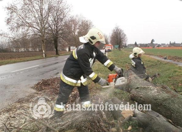 Veszélyt jelentő fák eltávolítása az 57. számú főúton