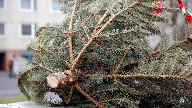 Hétfőn kezdik a kidobott karácsonyfák elszállítását Pécsett