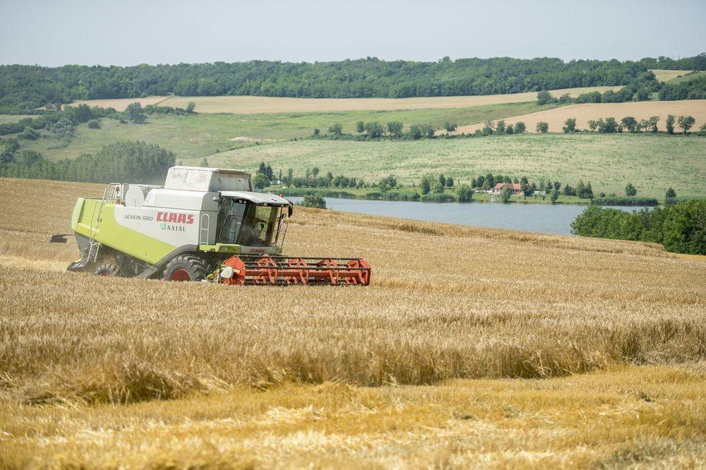 Zajlik az aratás Baranyában