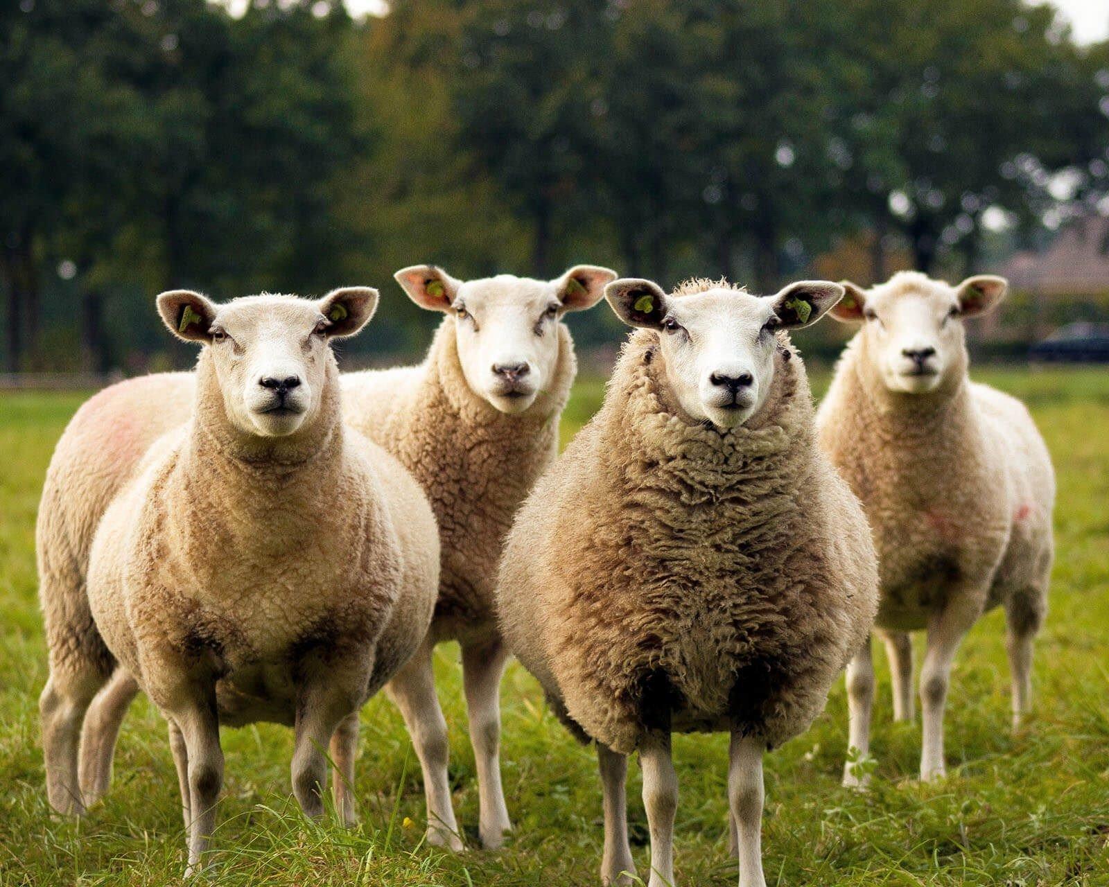 Baranyában is számos étterem vesz részt a Bárány napokon
