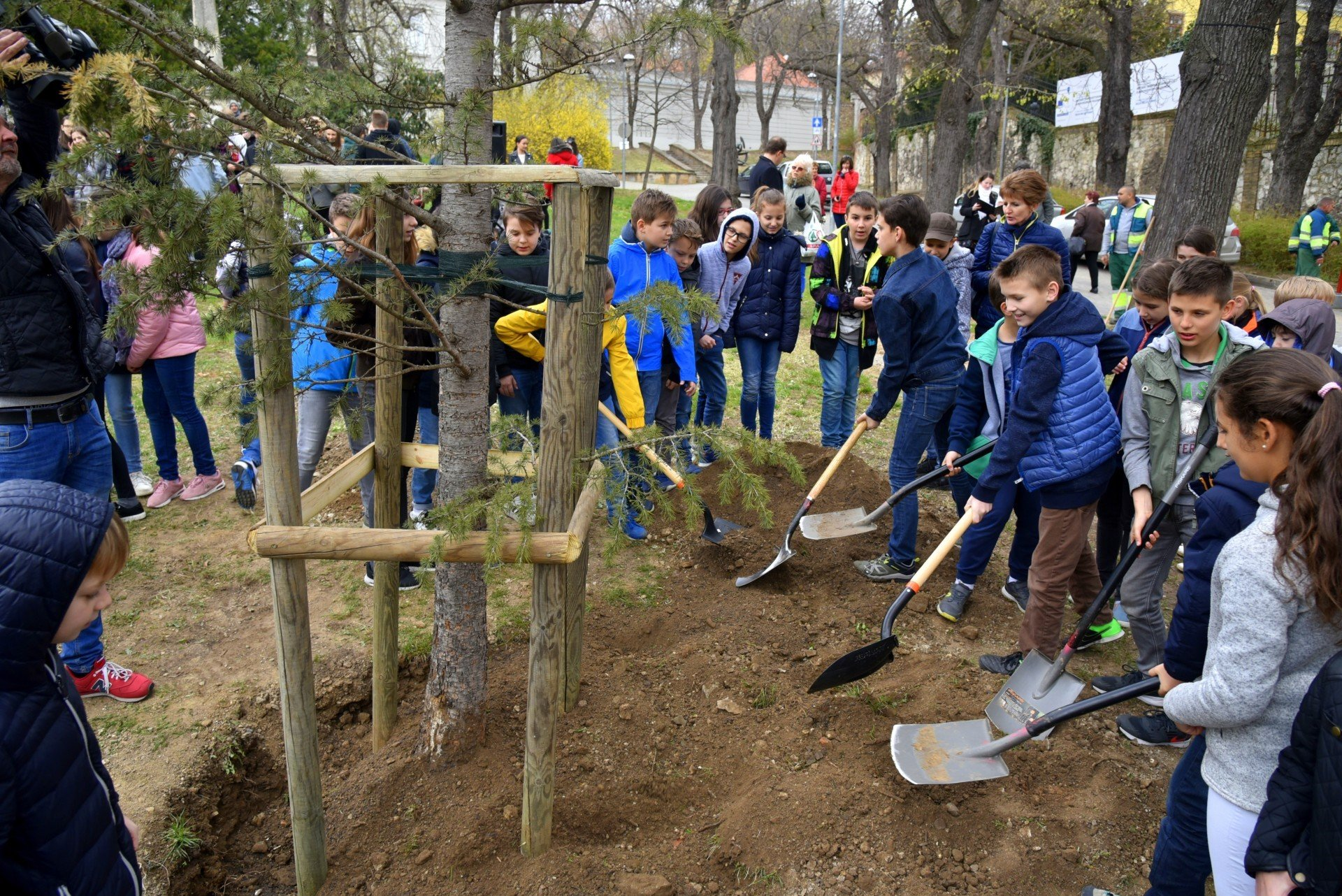 Faültetéssel indult a Csontváry emlékév a baranyai megyeszékhelyen