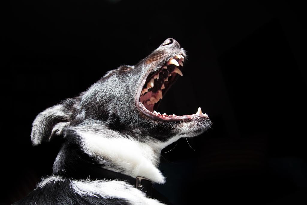 Tiltott állatviadal szervezői ellen emeltek vádat Mohácson