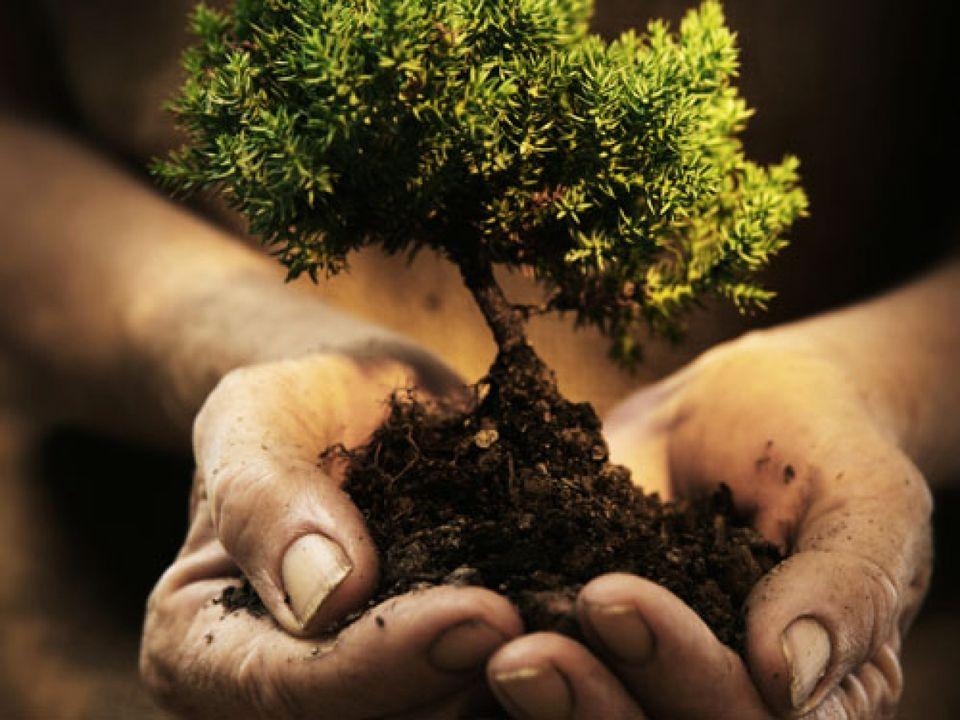 Az erdőkárok helyreállítására nyílt forrás