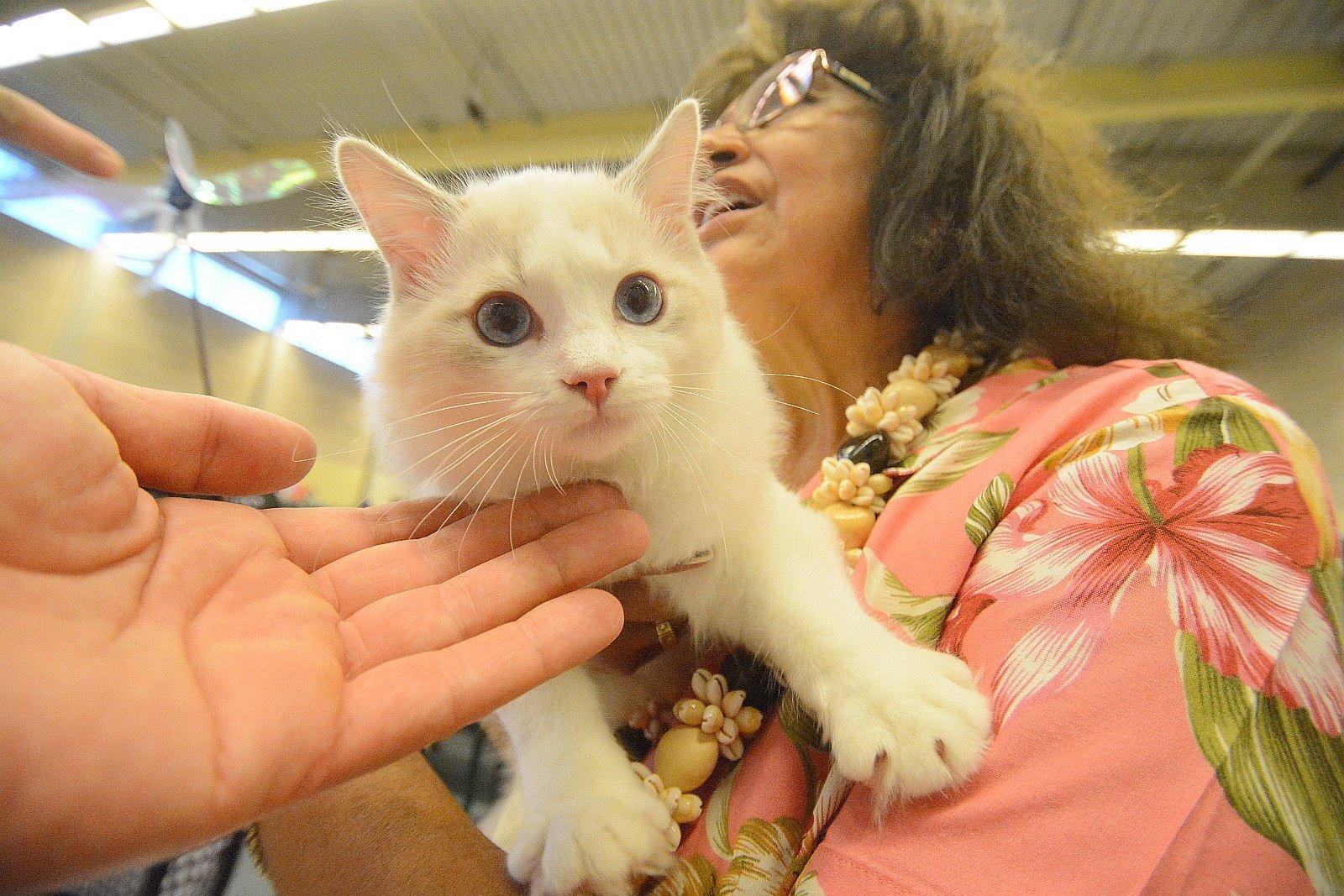 Nemzetközi macskakiállítás kezdődik február 16-án pénteken Székesfehérváron