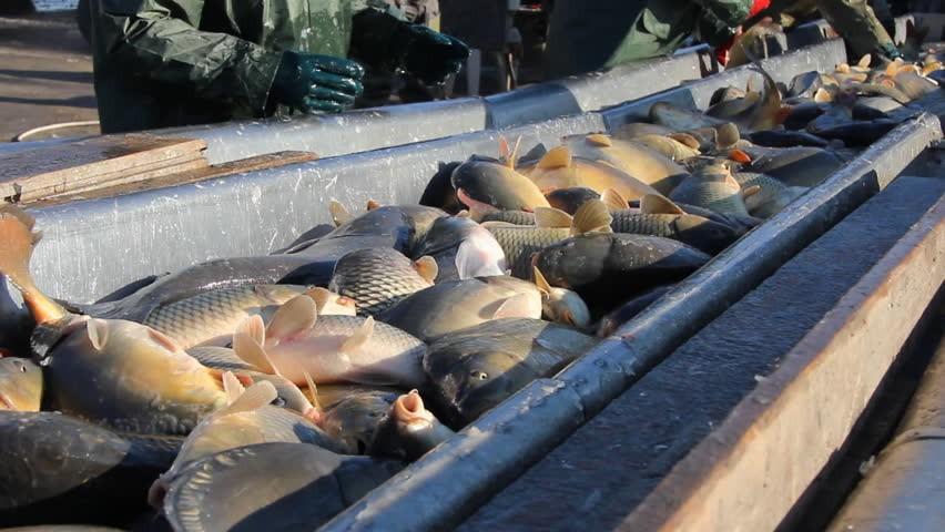 Az édesvízi haltenyésztők továbbra is számítanak az uniós támogatásra