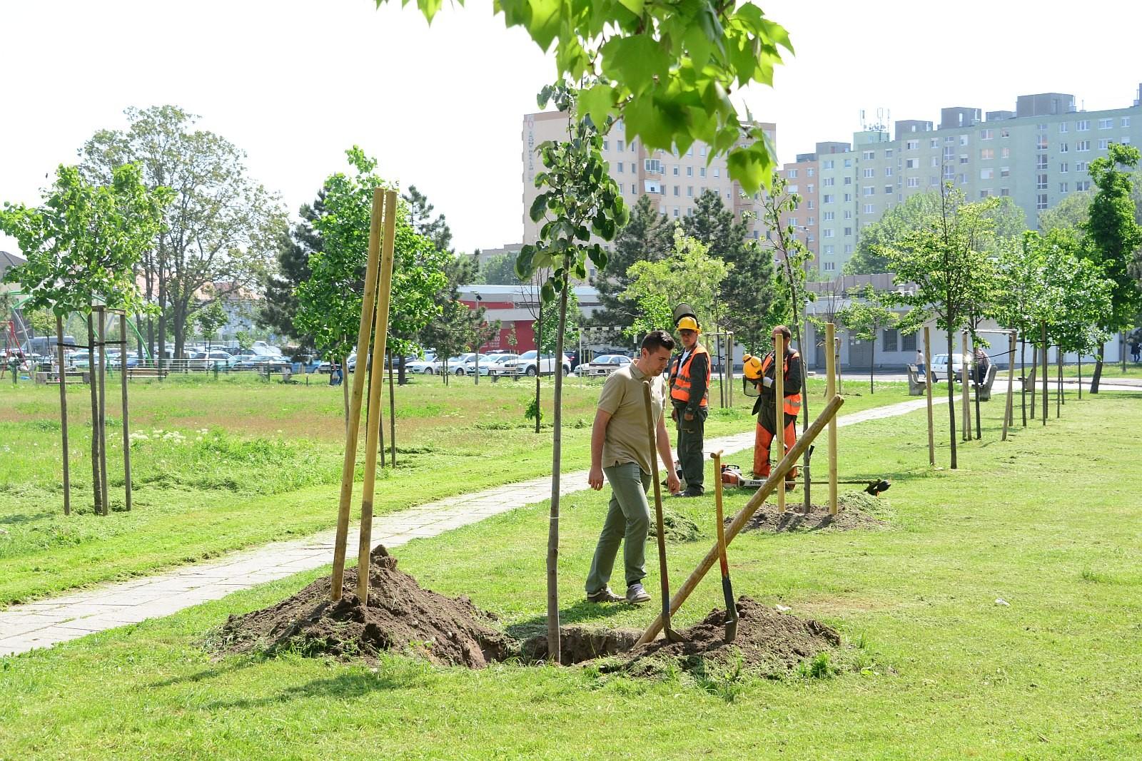 Száz fával támogatta az E.ON a tavaszi faültetéseket Székesfehérváron