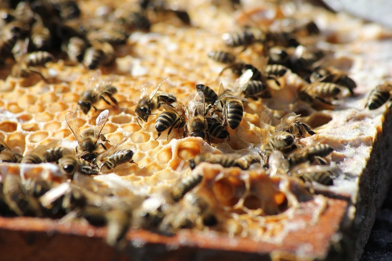 A szövetkezeti együttműködés jobb piaci lehetőségekhez juttathatja a méhészeket