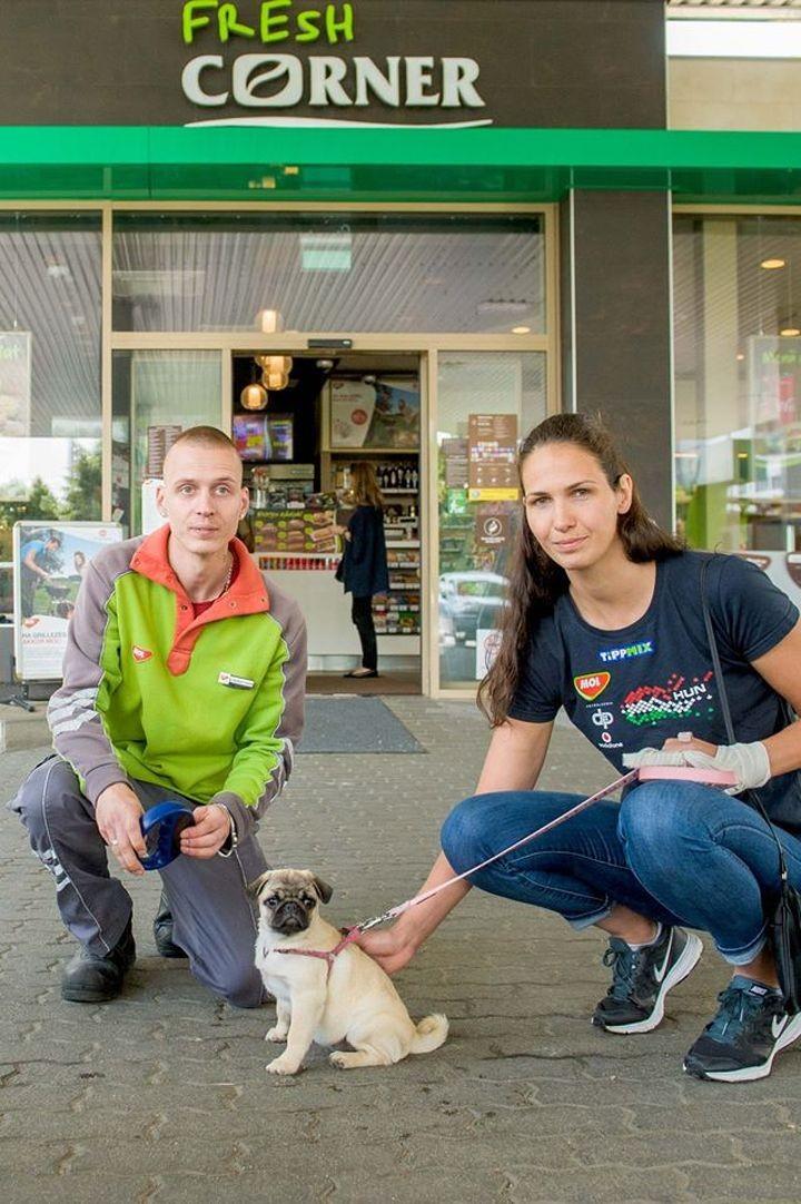 Már 100 helyen tudjátok beazonosítani a talált kutyusok gazdijait