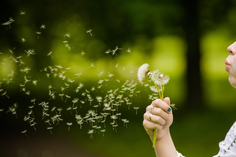 Rossz hír az allergiásoknak: a klímaváltozástól magasabb a pollentermelődés is