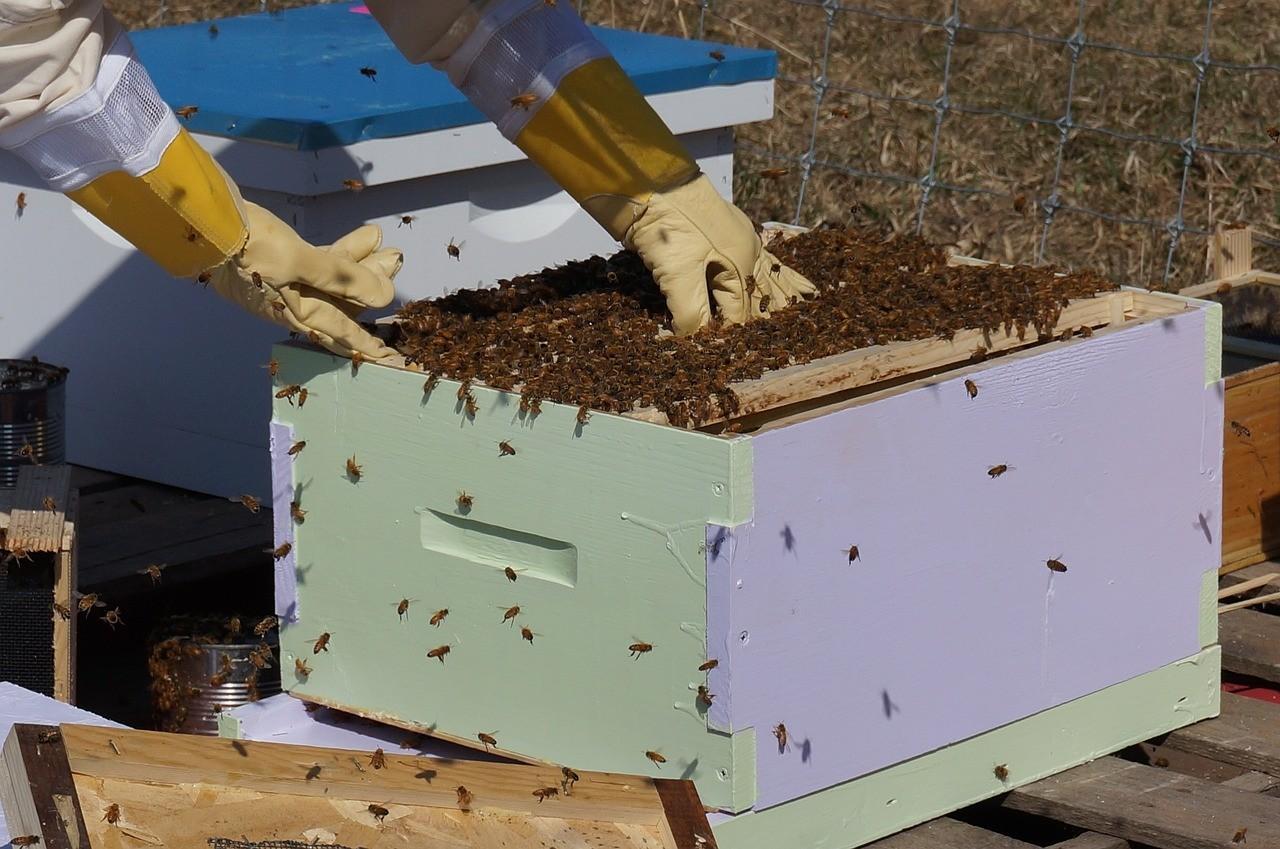 A hőség sem kedvez a méhészetnek
