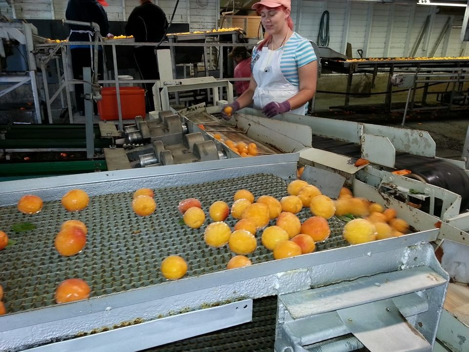 151 milliárd forint értékben nyílt meg új élelmiszeripari pályázat