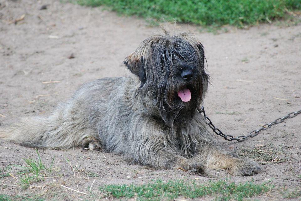 Tilos kutyát tartósan kikötve tartani január 1-jétől
