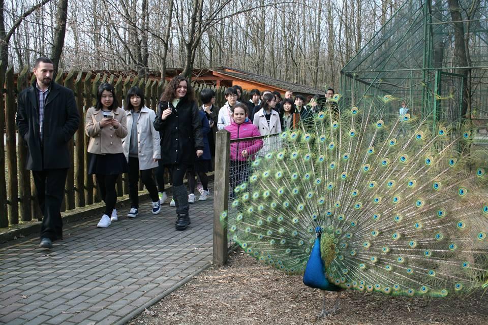 Erdők nemzetközi napja a magyar-japán barátság jegyében