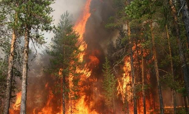 Tűzgyújtási tilalmat rendeltek el az erdőkben