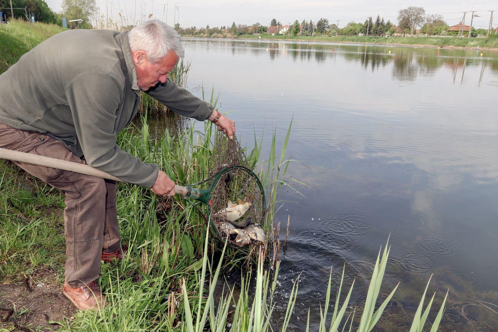 Harmincmillió forintot fordít halasításra idén a Tisza Horgászegyesület