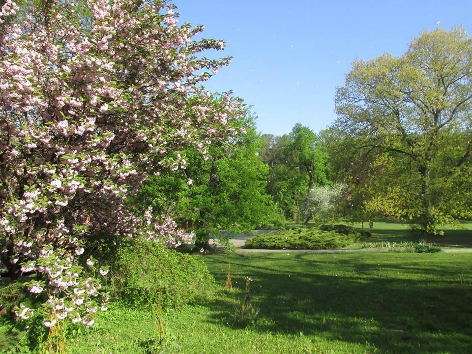 Képes tavasz a Tiszakürti Arborétumban