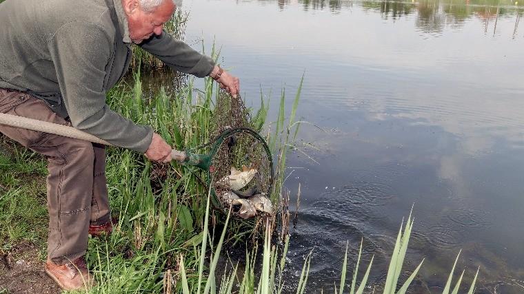 Ismét lehet pontyra horgászni