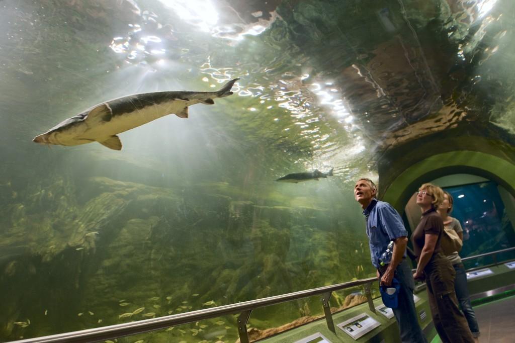 Egymilliomodik látogatóját fogadta a Tisza-tavi Ökocentrum