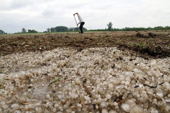 Idén is komoly mezőgazdasági károkat okozhat a hektikus időjárás