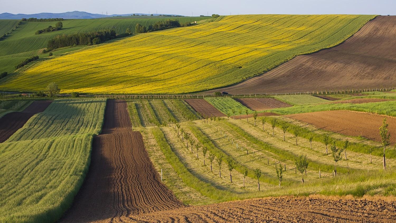 Tavaly átlagosan 16 százalékkal drágult a termőföld