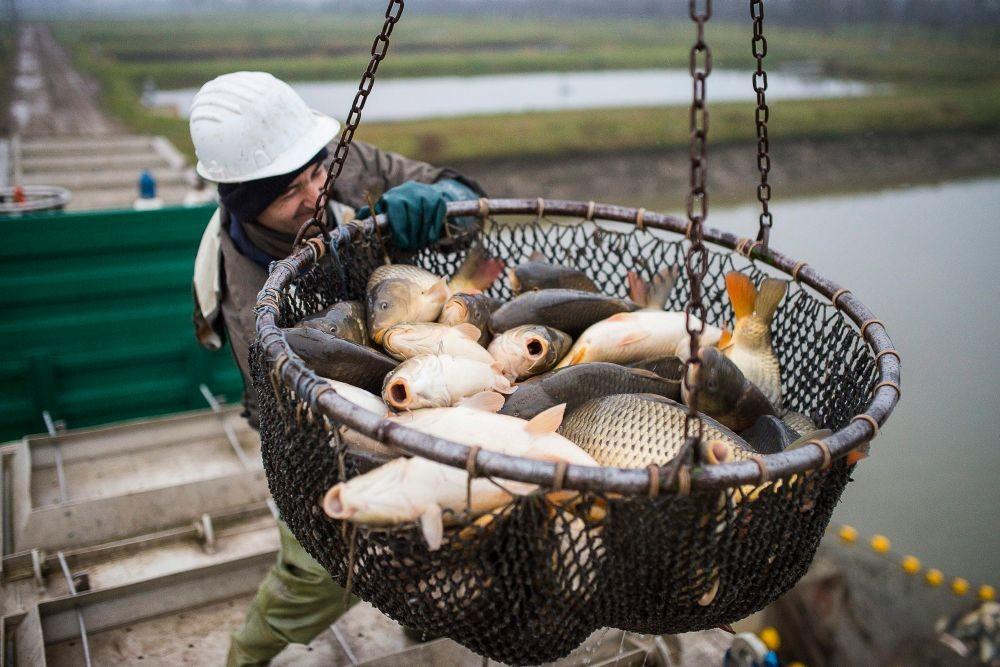 Szakmaközi szervezetet ismert el az FM a halászati és édesvízi akvakultúra területén