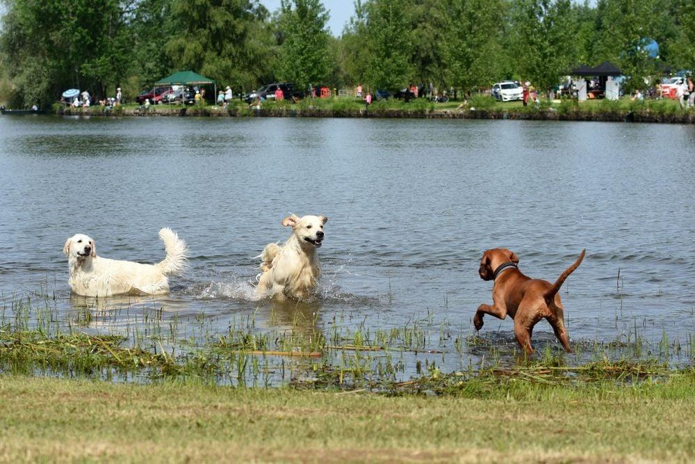 Megnyílt a tiszafüredi kutyastrand