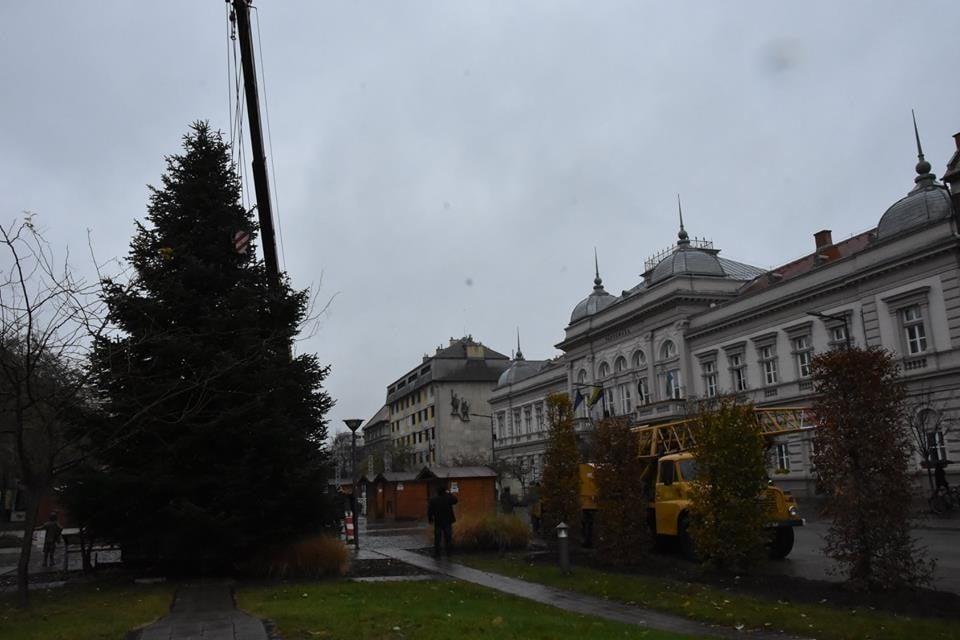 Megérkezett a Kossuth térre Szolnok karácsonyfája