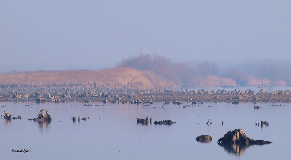 Befejeződött a Tisza-tó téli vízszint beállításának első lépcsője