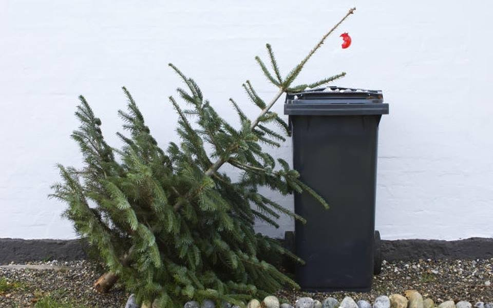 Mától gyűjtik Szolnokon a leszedett karácsonyfákat